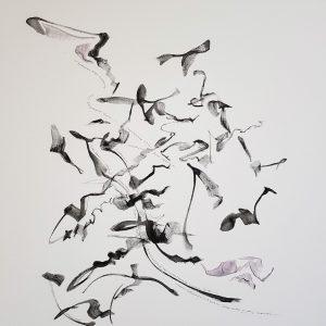 ABC of Aussie Birds